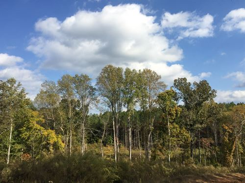 Tract 1580, Sealed Bid Land Sale : Henderson : Chester County : Tennessee