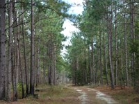 Prime Recreational & Timber Tract : Bishopville : Lee County : South Carolina