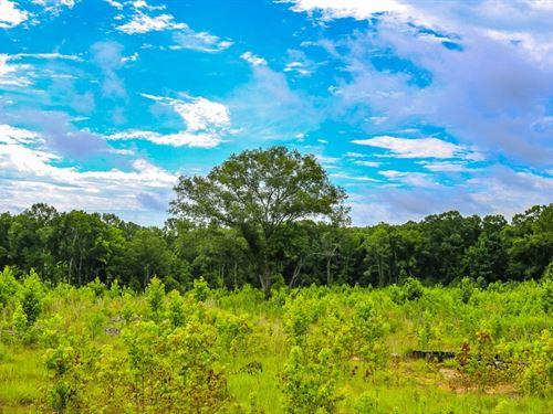 345 Acres In Jefferson Davis County : Prentiss : Jefferson Davis County : Mississippi