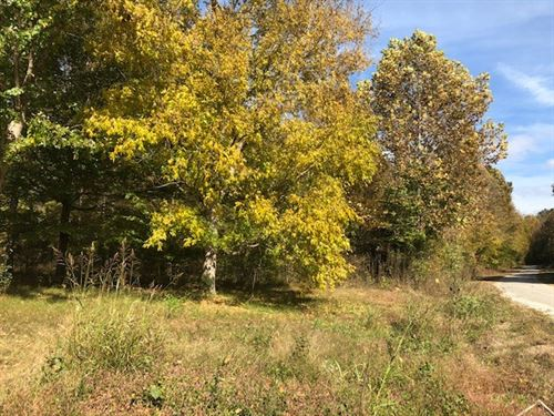 21.86 Acres Buildable Hunting Land : Linden : Perry County : Tennessee