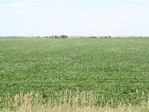 Hunting & Crop Land : Groton : Brown County : South Dakota