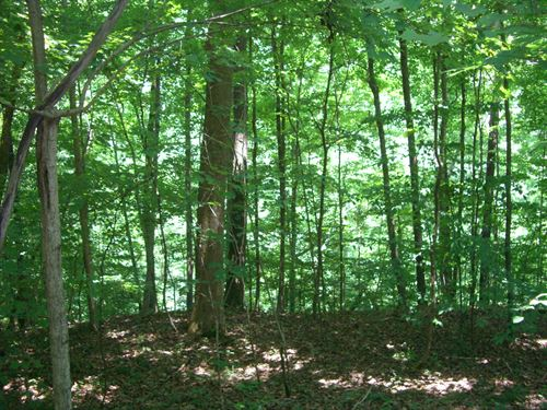 40 Acres Great Timber, Hunting : Hollywood : Jackson County : Alabama