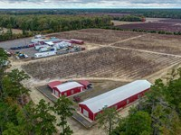 Merlino Blueberry Farm : Hammonton : Atlantic County : New Jersey