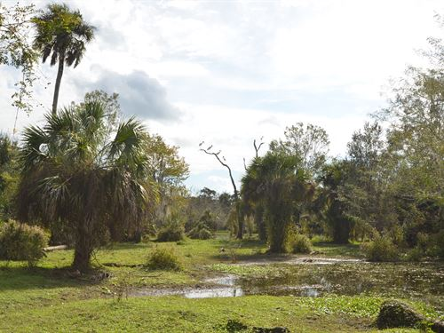 Peace River Hunting Recreation 875 : Nocatee : Desoto County : Florida