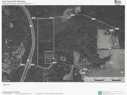 East Texas Pine Plantation : Rusk : Cherokee County : Texas