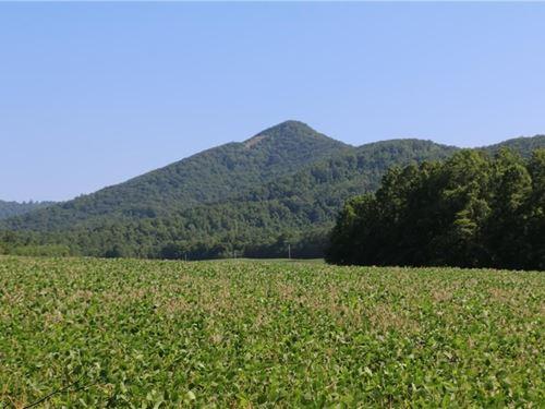 Land For Sale in Lambsburg VA : Lambsburg : Carroll County : Virginia