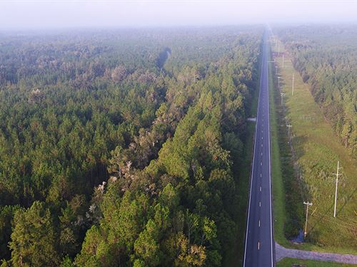 Sr 24 Timberland : Otter Creek : Levy County : Florida