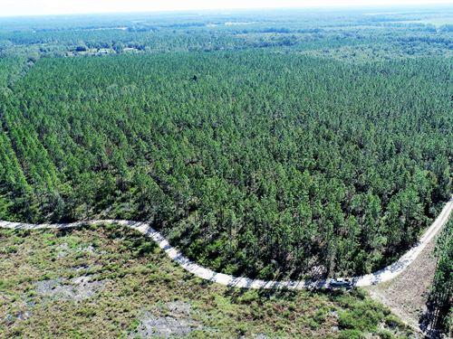 Roseapple Hill : Pinetta : Madison County : Florida
