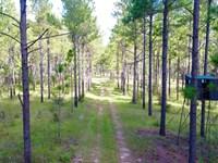 Tipton Farm : Meigs : Thomas County : Georgia