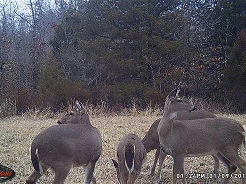 160 Acres Prime Hunting Property : Ava : Douglas County : Missouri