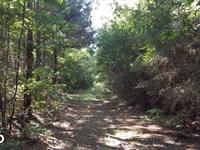 160 Acre Hunter's Paradise/Timber : Livingston : Polk County : Texas