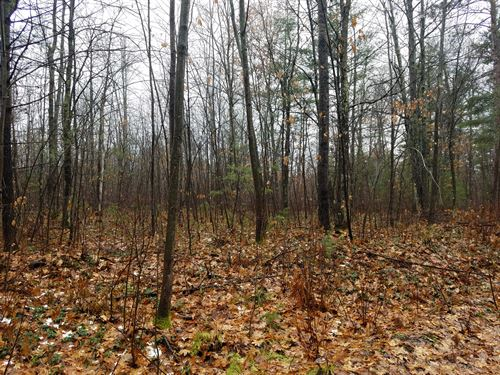 Beautiful Wooded Acreage : Lac Du Flambeau : Vilas County : Wisconsin