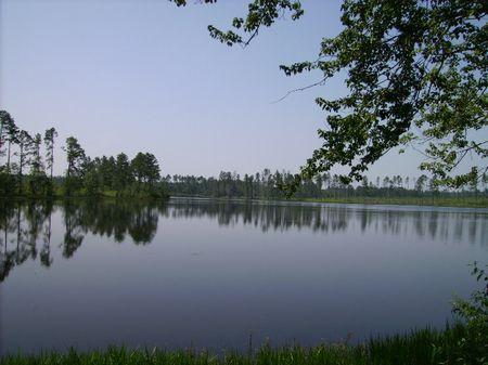 Jenkins Pond Tract : Swainsboro : Emanuel County : Georgia