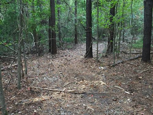 Timber/Recreational Hunting Tract : Bath : Beaufort County : North Carolina