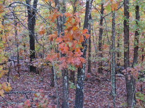 Timberland Property in Missouri : Hartshorn : Texas County : Missouri
