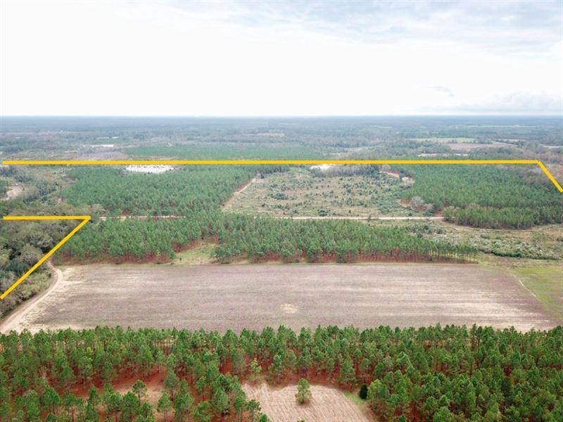 Alabama Hunting Land Farm, Deer : Hartford : Geneva County : Alabama
