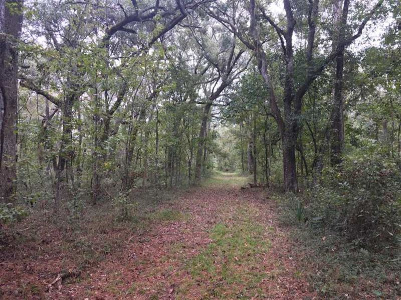 230 Acre Timber, Hunting Land For : White Oak : Camden County : Georgia