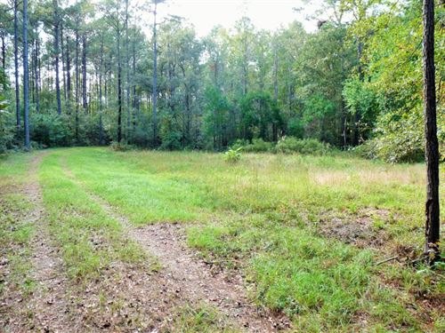 29 Acres in Green Pond, SC : Green Pond : Colleton County : South Carolina
