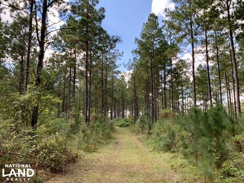 CR 4 Trophy Timber & Hunting Tract : Putnam : Marengo County : Alabama