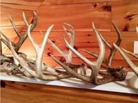 Highland Home Hardwood Timber : Highland Home : Crenshaw County : Alabama