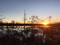40.89 Acres With Camp Site At 126 : Isola : Humphreys County : Mississippi