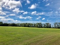 Levy County Fl, Land 74 Acres : Chiefland : Levy County : Florida