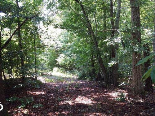Crenshaw County Hunting And Timber : Lapine : Crenshaw County : Alabama