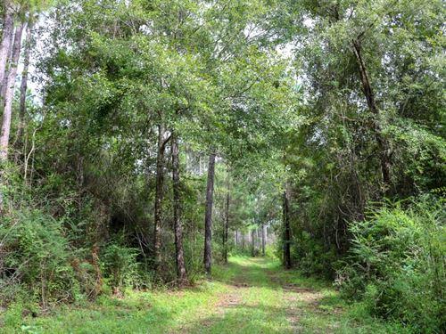 154 Acres In Lamar County In Lumber : Lumberton : Lamar County : Mississippi