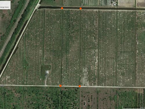 13.34 Acre Orange Grove : Labelle : Hendry County : Florida