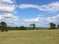 Perfect Cattle Farm : Buena Vista : Marion County : Georgia