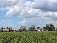 Beautiful Old Farmstead- Mixed Uses : Buena Vista : Marion County : Georgia