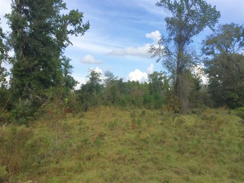 Great Small Tract For Hunting : Jasper : Hamilton County : Florida