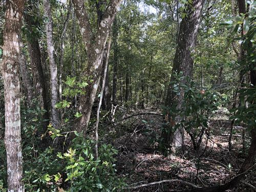 Miller Hardwoods : Old Town : Dixie County : Florida