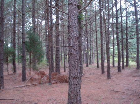 Stoneaway Tract : Bennettsville : Marlboro County : South Carolina