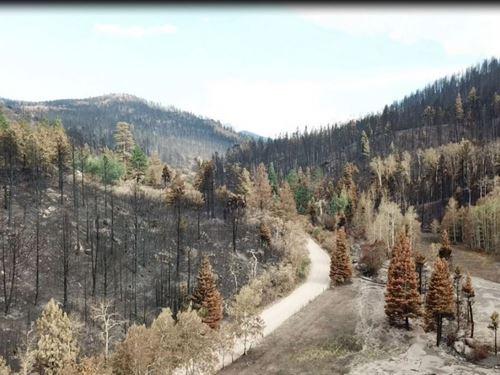 Hog Heaven Ranch : La Veta : Huerfano County : Colorado