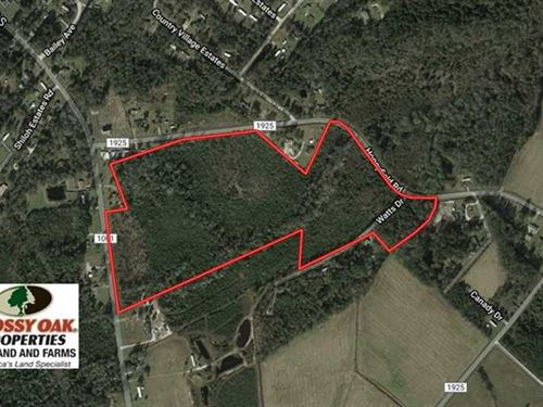 43.79 Acres of Hunting And Timber : Whiteville : Columbus County : North Carolina