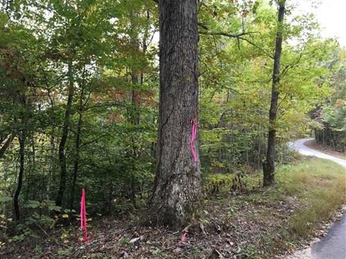 77 Beautifully Wooded Acres Near : Buffalo : Larue County : Kentucky