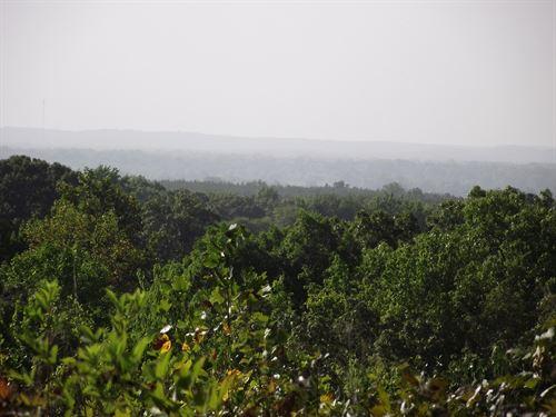 Unrestricted Land Tn, Owner : Adamsville : Hardin County : Tennessee