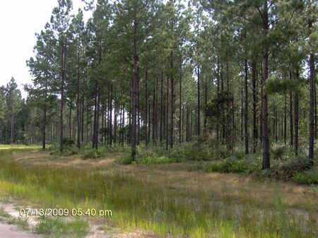 20 Ac Only 3.5 Miles To Wal-mart : Baxley : Appling County : Georgia