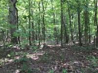 43.95+/-Acres Mtn View Near Sewanee : Sewanee : Marion County : Tennessee