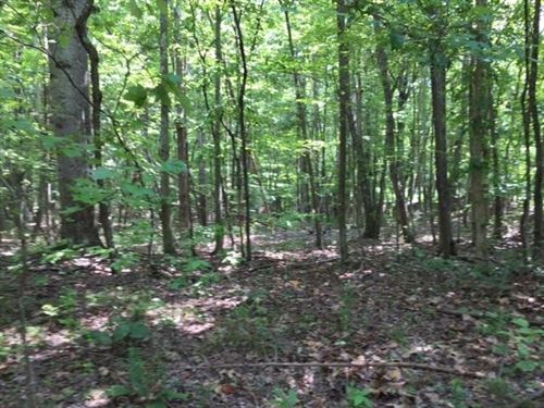 43.95+/-Acres Mtn View Near Sewanee : Sewanee : Marion County : Tennessee