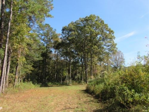 206 Acres In MS & LA : Kentwood : Tangipahoa Parish : Louisiana