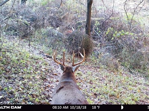 Monumental Deer Hunting Land : Richland Center : Richland County : Wisconsin