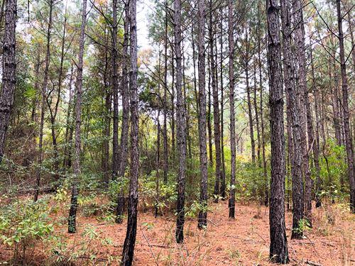 40 Ac Off Nichols Creek Rd : Deweyville : Newton County : Texas