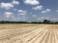 X Way North Farm : Laurinburg : Scotland County : North Carolina