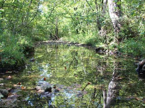 170 Acres With Live Creek : Camdenton : Camden County : Missouri