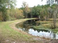 Still Branch, Timber & Creek : Waynesboro : Burke County : Georgia