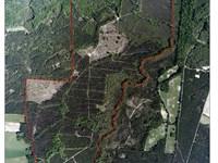 Ole 79 Plantation, Ogeechee River : Millen : Jenkins County : Georgia