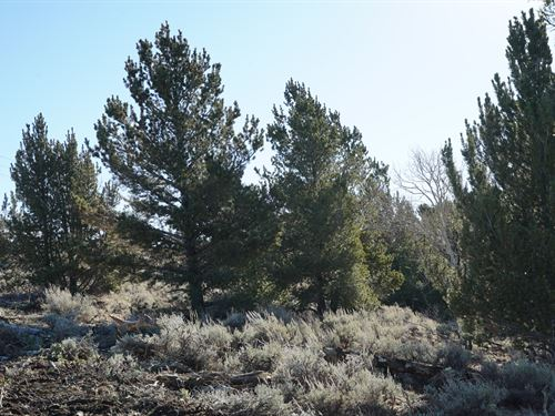 Slate Creek Lot 1 : Lander : Fremont County : Wyoming