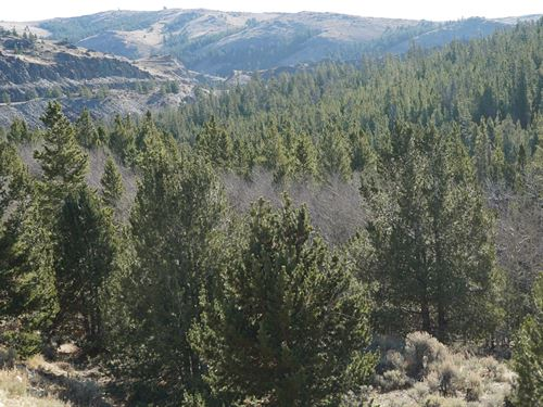 Slate Creek Lot 6 : Lander : Fremont County : Wyoming